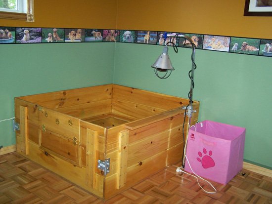 Whelping Box Plans http://www.goldpawgoldens.com/litters.htm